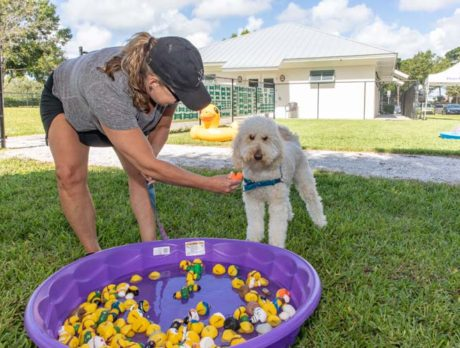 Pooches lap up the attention at 'Dog Days' pool party