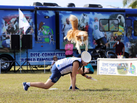 Every dog has a great day at 'Bark in the Park' event