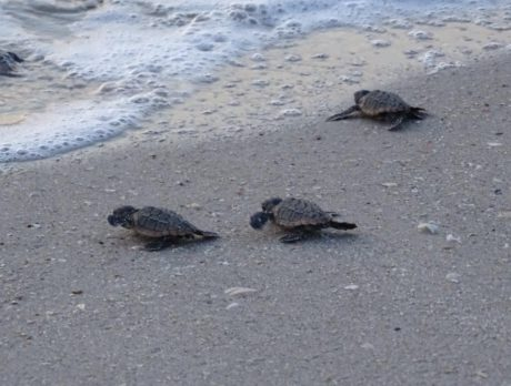 Coming Up! Tour is egg-cellent way to see sea turtle nesting