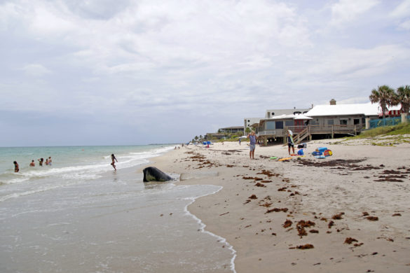 County to proceed with partial beach restoration on Barrier Island